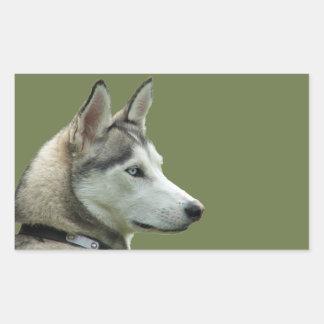 Husky Siberian dog beautiful photo dog stickers