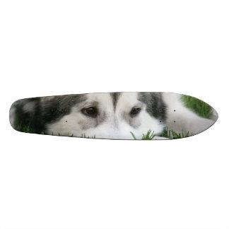 Husky Custom Skateboard
