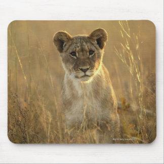Hwange National Park, Zimbabwe. Mouse Mat