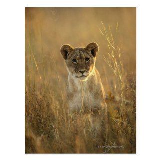 Hwange National Park, Zimbabwe. Postcard