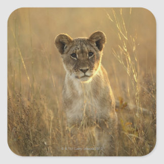 Hwange National Park, Zimbabwe. Square Sticker