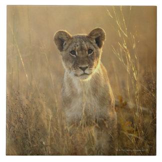 Hwange National Park, Zimbabwe. Tile
