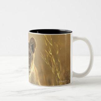 Hwange National Park, Zimbabwe. Two-Tone Coffee Mug