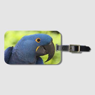 Hyacinth Blue Macaw Luggage Tag