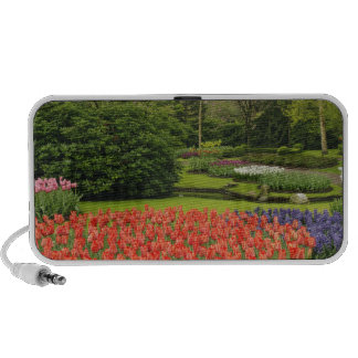 Hyacinth flowers and tulips in garden, PC speakers