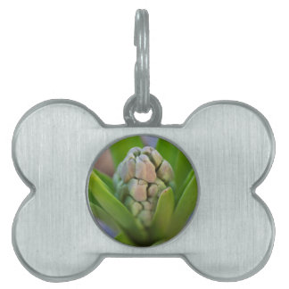 hyacinth in the garden pet name tag