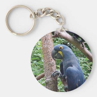 Hyacinth Macaw Basic Round Button Key Ring