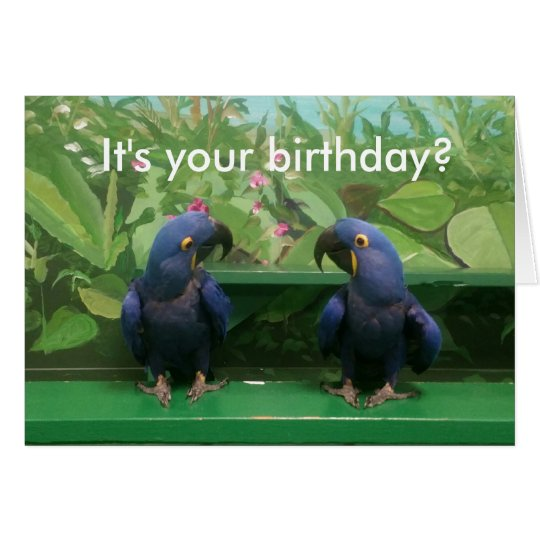 Hyacinth Macaw Birthday Card