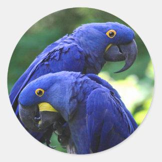 Hyacinth Macaws Classic Round Sticker