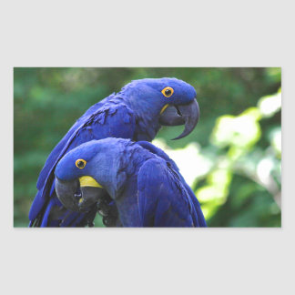Hyacinth Macaws Rectangular Sticker