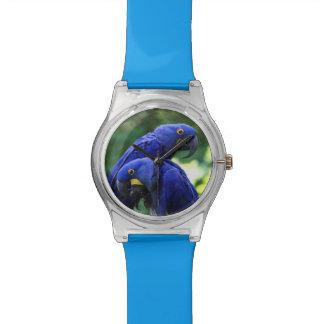 Hyacinth Macaws Wristwatch