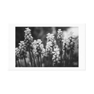 Hyacinths in Mono Canvas Prints