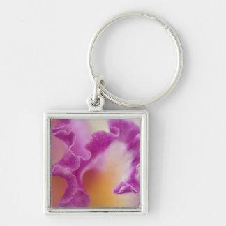 Hybrid orchid close-up, Delray Beach, Florida Key Ring