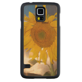 Hybrid sunflower blowing in the wind at dusk carved maple galaxy s5 case