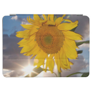 Hybrid sunflower blowing in the wind at dusk iPad air cover