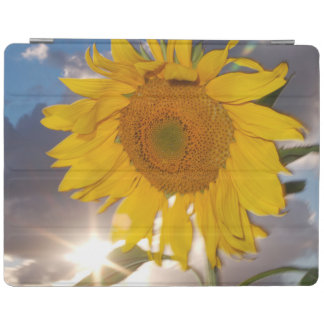 Hybrid sunflower blowing in the wind at dusk iPad cover
