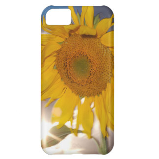 Hybrid sunflower blowing in the wind at dusk iPhone 5C case