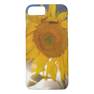Hybrid sunflower blowing in the wind at dusk iPhone 8/7 case