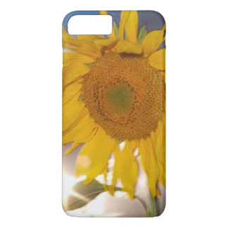 Hybrid sunflower blowing in the wind at dusk iPhone 8 plus/7 plus case
