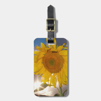 Hybrid sunflower blowing in the wind at dusk luggage tag