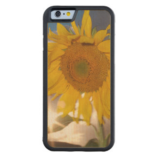 Hybrid sunflower blowing in the wind at dusk maple iPhone 6 bumper case