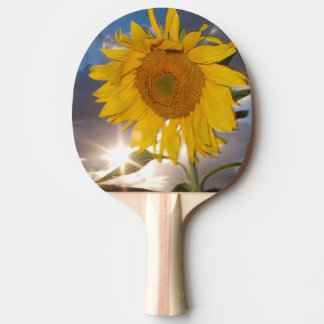 Hybrid sunflower blowing in the wind at dusk ping pong paddle