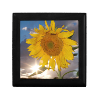 Hybrid sunflower blowing in the wind at dusk small square gift box