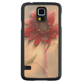 Hybrid sunflower blowing in the wind carved maple galaxy s5 case
