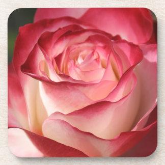 Hybrid Tea Rose Coaster