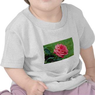 Hybrid Tea Rose 'Fragrant Cloud' White flowers Tee Shirt