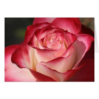 Hybrid Tea Rose Greeting Card