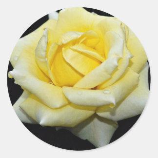 Hybrid Tea Rose 'Helmut Schmidt' White flowers Round Sticker