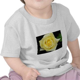 Hybrid Tea Rose 'Helmut Schmidt' White flowers Tshirt