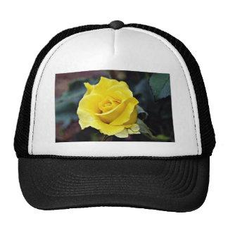 Hybrid Tea Rose 'Lanvin' White flowers Trucker Hats