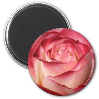 Hybrid Tea Rose Magnets