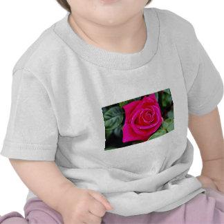 Hybrid Tea Rose 'Miss All-American Beauty' White f Tshirt