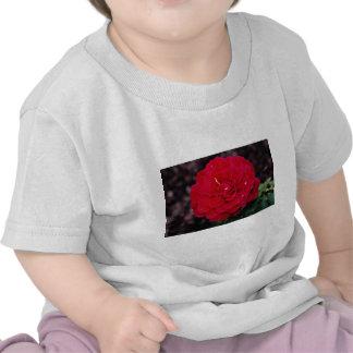 Hybrid Tea Rose 'Mister Lincoln' White flowers T-shirt