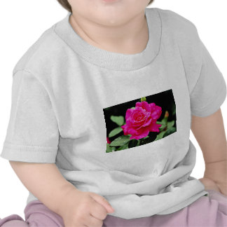 Hybrid Tea Rose 'Pink Peace' White flowers Tee Shirts