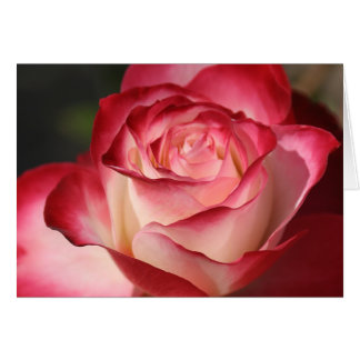 Hybrid Tea Rose Stationery Note Card