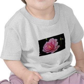 Hybrid Tea Rose 'Tiffany' Yellow flowers T-shirts