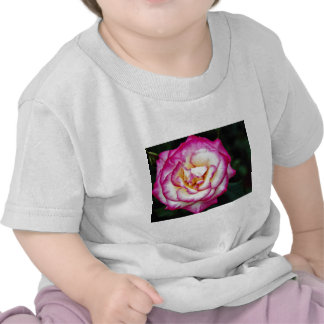 Hybrid Tea Rose White flowers Tee Shirts