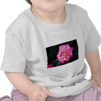 Hybrid Tea Rose Yellow flowers T-shirt