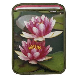 Hybrid water lilies iPad sleeves