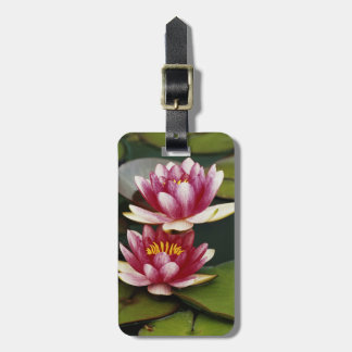 Hybrid water lilies luggage tag