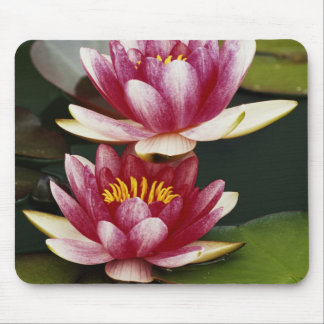 Hybrid water lilies mouse mat