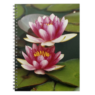 Hybrid water lilies notebooks