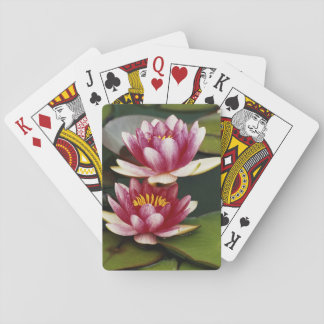 Hybrid water lilies playing cards