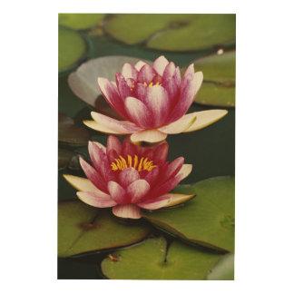 Hybrid water lilies wood print