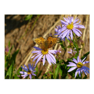 Hydaspe Fritillary on Purple Aster Flowers Postcard