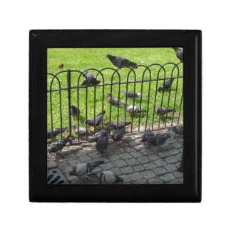 Hyde Park Pigeons Gift Box